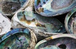 Abaloneskal Arkivbilder