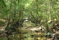 Abandance леса на Prukradueng Стоковые Изображения RF