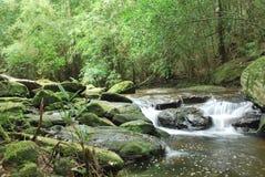 Abandance av skogen på Prukradueng Royaltyfria Bilder