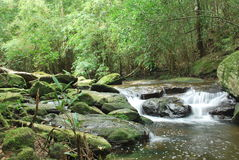 Abandance da floresta em Prukradueng imagens de stock royalty free