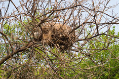Abandon bird nest Royalty Free Stock Photography