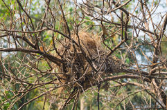 Abandon bird nest Stock Image