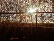 Abandon place. Abandon barbed wire and plants in evening sunset stock photo