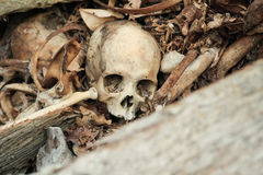 Abandon Skull on the ground. At cemetary historic site at Toraja, South sulawesi royalty free stock photo