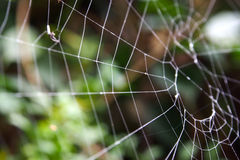 Abandon spider web Stock Photos