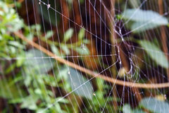Abandon spider web Royalty Free Stock Photography