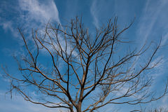 Abandon tree. With no Leaves royalty free stock image