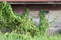 Abandon wooden house Stock Images