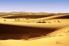 Abandona la duna Foto de archivo libre de regalías