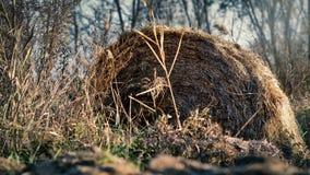 Abandonado, bala de la paja del otoño Foto de archivo libre de regalías
