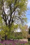 Abandonado bem ao lado da árvore imagem de stock