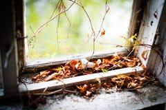 Abandonado a casa con las hojas viejas en el marco de ventana Imagen de archivo libre de regalías