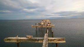 Abandonado för muelle för Cormoranes posadosen Arkivbild