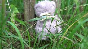 Abandonded长毛绒玩具灰色玩具熊坐在草的篱芭下的,寂寞概念,童年记忆  股票视频