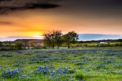 Abandonded gammalt hus i Texas Wildflowers Royaltyfri Fotografi