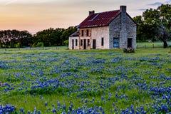 Abandonded gammalt hus i Texas Wildflowers Arkivfoto