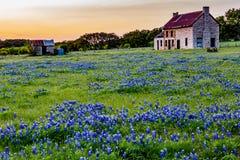 Abandonded gammalt hus i Texas Wildflowers Royaltyfri Foto