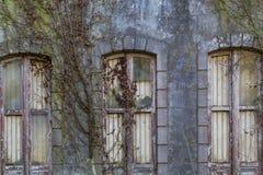 Abandonded gammalt hus med växter Royaltyfri Fotografi