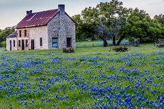 Abandonded Old House In Texas Wildflowers. Stock Photography