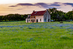 Abandonded Old House in Texas Wildflowers. royalty free stock photo