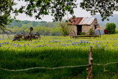 Abandonded Old House in Texas Wildflowers. stock photos
