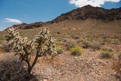 Abandone cerca del valle del parque de estado del fuego, Nevada Foto de archivo