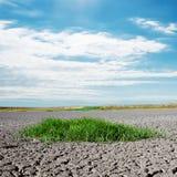 Abandone con la hierba verde y las nubes en cielo azul Foto de archivo libre de regalías