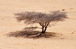 Abandone el árbol Foto de archivo
