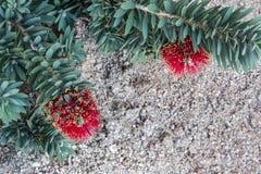 Abandone el arbusto con las flores rojas y amarillas contra un fondo de la grava Imagen de archivo libre de regalías
