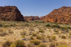 Abandone el barranco por completo de las plantas de desierto en Utah, los E.E.U.U. Imágenes de archivo libres de regalías