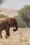 Abandone el elefante Foto de archivo