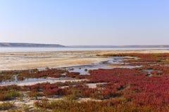 Abandone el lago de sal con la vegetación roja a lo largo de los bancos Foto de archivo libre de regalías