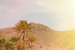 Abandone el lugar con las palmeras situadas en Almería (España suroriental Imagenes de archivo