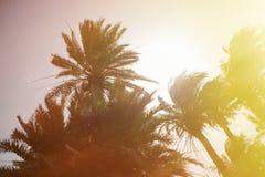 Abandone el lugar con las palmeras situadas en España suroriental Fotografía de archivo libre de regalías