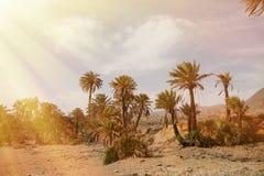 Abandone el lugar con las palmeras situadas en España suroriental Fotos de archivo