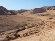 Abandone el paisaje cerca del mar muerto con la manada del Ca Fotografía de archivo