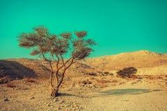 Abandone el paisaje cerca del mar muerto, Israel Foto de archivo libre de regalías