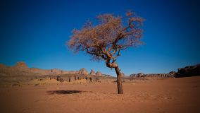Abandone el paisaje con el acacia en valle del Naga de Moul en el parque nacional del nAjjer de Tassili en Argelia Fotos de archivo