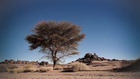 Abandone el paisaje con el acacia en valle del Naga de Moul en el parque nacional del nAjjer de Tassili en Argelia Foto de archivo libre de regalías