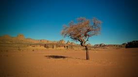 Abandone el paisaje con el acacia en valle del Naga de Moul en el parque nacional del nAjjer de Tassili en Argelia imágenes de archivo libres de regalías