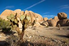 Abandone el paisaje con el cactus en primero plano en California Imagen de archivo