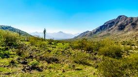 Abandone el paisaje con el Saguaro y los cactus de barril a lo largo de la pista de senderismo de Bajada en las montañas del parq Imagen de archivo libre de regalías