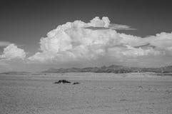 Abandone el paisaje con la planta de los mirahilis de las montañas y del Welwitschia Imagen de archivo libre de regalías