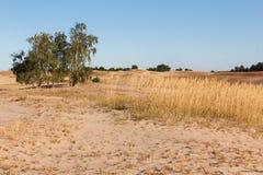 Abandone el paisaje con las plantas muertas en dunas de arena debajo del cielo soleado Fotos de archivo