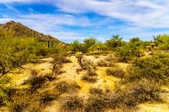 Abandone el paisaje con los arbustos, el Saguaro y los cactus de Cholla Fotos de archivo libres de regalías