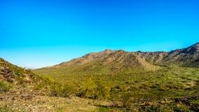 Abandone el paisaje con los cactus del Saguaro a lo largo del rastro nacional cerca del San Juan Trail Head en las montañas del p Imagenes de archivo