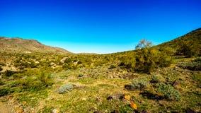 Abandone el paisaje con los cactus del Saguaro a lo largo del rastro nacional cerca del San Juan Trail Head en las montañas del p Foto de archivo libre de regalías