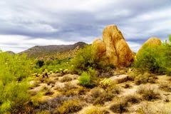 Abandone el paisaje con los cantos rodados con el Saguaro y los cactus de Cholla Foto de archivo libre de regalías