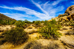 Abandone el paisaje con los cantos rodados con el Saguaro y los cactus de Cholla Imagenes de archivo