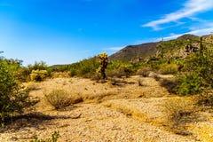 Abandone el paisaje con los cantos rodados con el Saguaro y los cactus de Cholla con la montaña negra en el fondo Imagen de archivo libre de regalías
